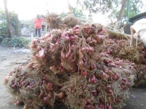 Bawang merah produksi petani NTB