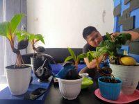Bonsai Kelapa, Hobi yang Mendatangkan Untung