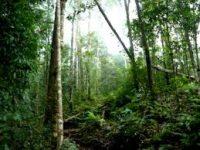 Penerbitan Sertifikat Ilegal di Hutan Sekaroh Dilaporkan ke KPK