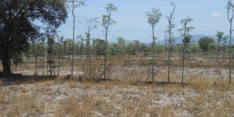 Kekeringan Lahan Pertanian Padi di NTB Menurun, Puso Meningkat