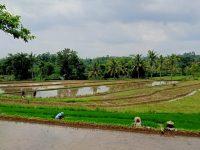 Destinasi Wisata di Kaki Rinjani, Desa Mas Mas Berharap Bantuan Sarana