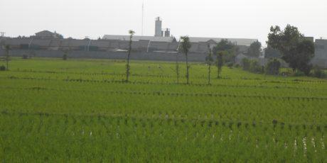 Alih Fungsi Lahan Nyaris Tak Terkendali, Lahan Pertanian di Kota Mataram Tersisa 1,4 Ribu Ha