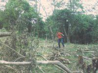 Masyarakat Melawan, Pemda Kesulitan Tangani Perambahan Hutan TNGR
