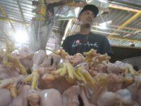 Harga Ayam, Tomat, Cabai dan Bawang Naik Signifikan