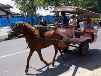 Kotoran Kuda Masih Jadi Persoalan di Jalan Kota Mataram