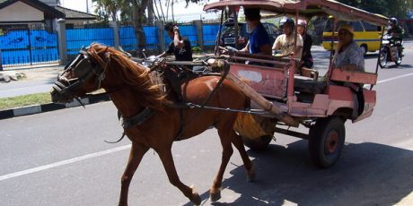 Dishubkominfo Kota Mataram Pasang 100 Kantong Kotoran Kuda