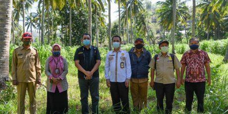Lima Desa di Loteng Ini akan Menjadi Bagian Program 1000 Desa Sapi di Indonesia