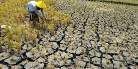 Musim Kemarau, Hasil Produksi Petani Kota Mataram Menurun