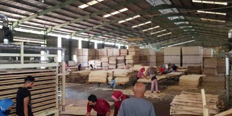 Pabrik Tripleks Hadir di Loteng, Perlu Digalakkan Penanaman Sengon di Lahan Kritis